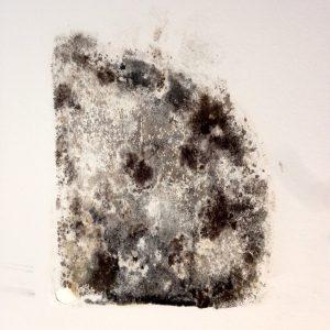 muffa sui muri rimedi umidità